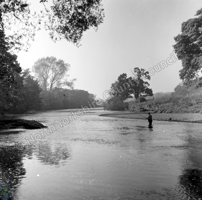 Fishing, River Ure, Ripon